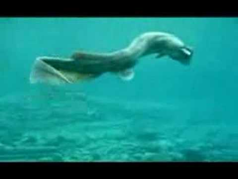 Rare Dragon/Shark Found In Japan