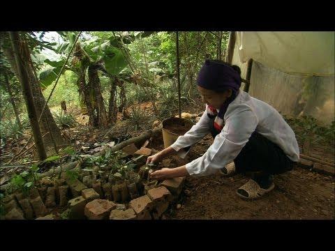 Biological and Cultural Diversity in Vietnam