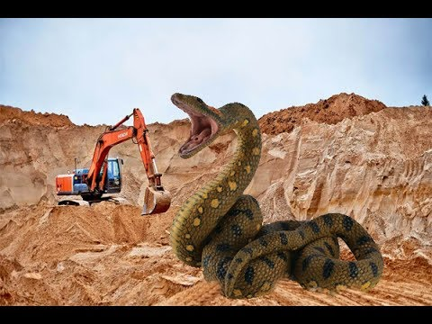 Giant snakes.  National Geographic Animallife