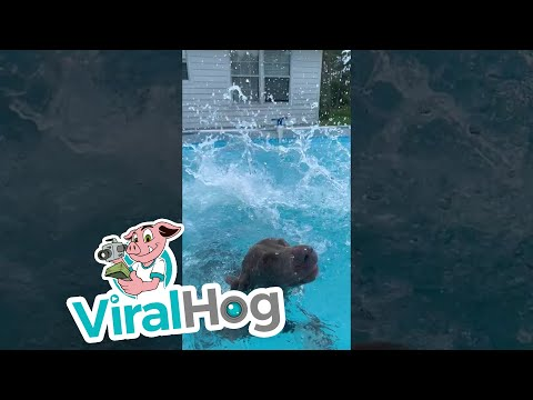 Aaron - Dog's Slo-Mo Dive Into A Pool