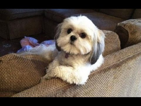 Funny Dogs Acting Like Humans Compilation 2016 || NEW HD