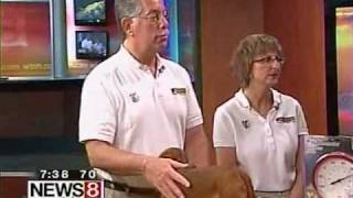 Bark Busters Home Dog Training - Summer Dog Safety Tips