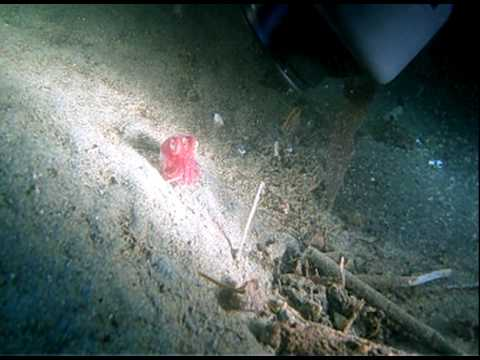 Kellie spots a Stubby Squid! 2-27-10
