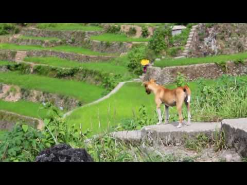 Travel to Batad, Philippines and its Rice Terraces