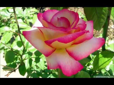 Ccb fotos flores e paisagens youtube - Fotos de flores bonitas ...