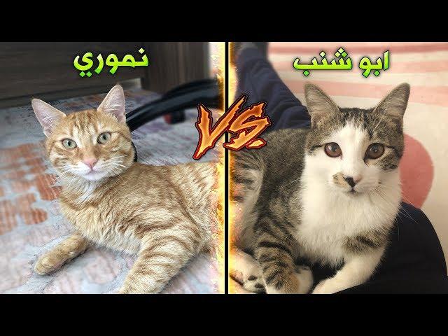 تحدي القطط بين نموري VS ابو شنب !!؟