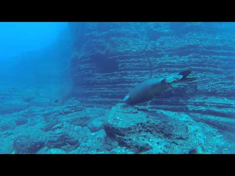 Niihau Diving - GoPro Footage 2