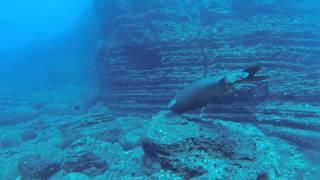Niihau Diving - GoPro Footage 2
