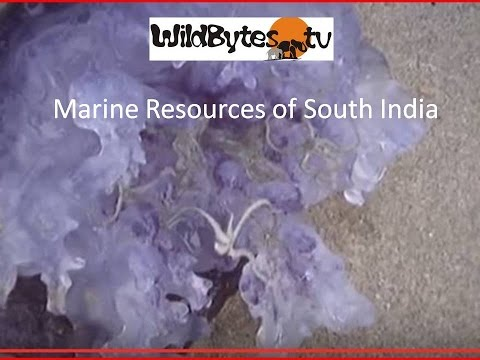 Marine Resources Of South India