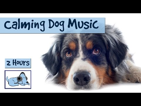 Over 2 Hours of Calming Music for Dogs. Perfect for during Storms or Separation Anxiety Sufferers