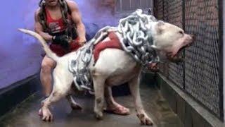 Gambar cover El PERRO cazador mas letal de todos los tiempos - Dogo argentino