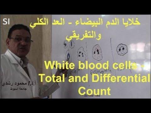 خلايا الدم البيضاء العد الكلي والتفريقي White Blood Cells Dlc Youtube