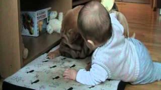 sharpei Arsa and baby