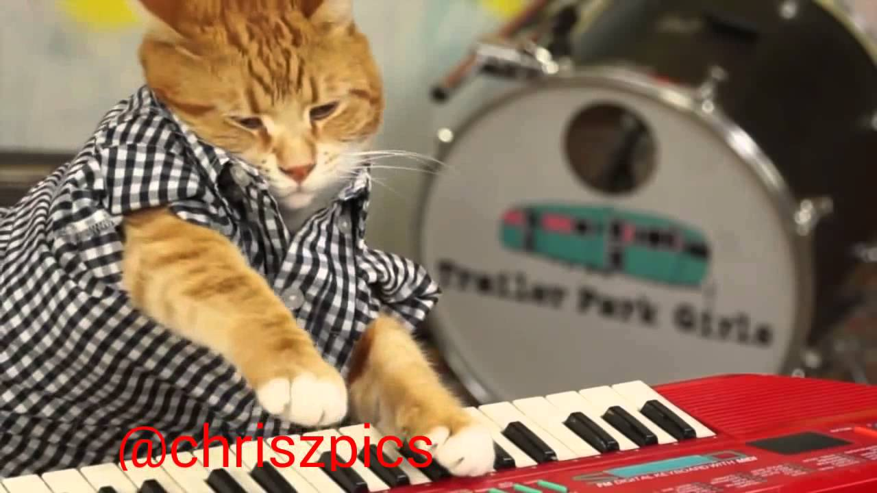 Hip Hop Cat Performs Yg Keyboard Cat Youtube
