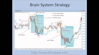 Brain System Forex Strategy