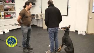Akc Canine Good Citizen Test1: Accepting A Friendly Stranger