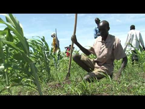 Twic State  farming