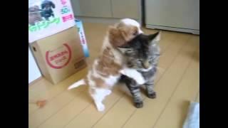 Настоящая дружба животных.