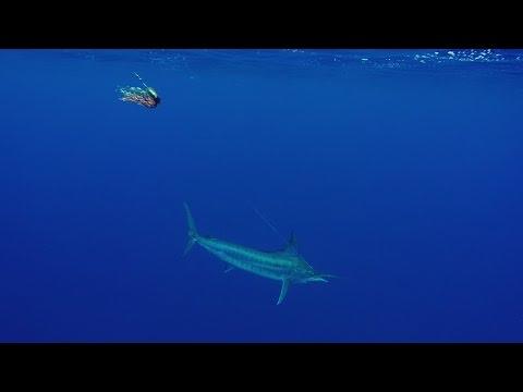 A Ahi Nui (2) - Peche Haute mer - Espadon (Swordfish)