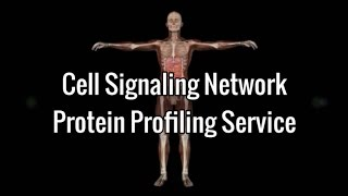 Cell Signaling Network - Protein Profiling Service