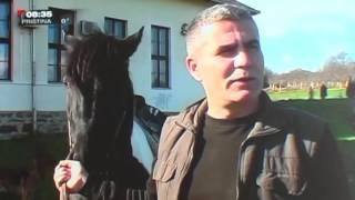 Odgajivaci konja iz Blaca   TV PRVA Gorica