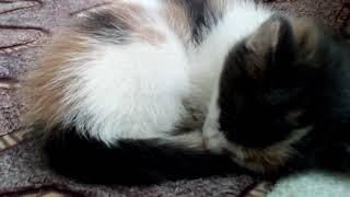 """Наша радость кошка """"Ю-ю"""""""