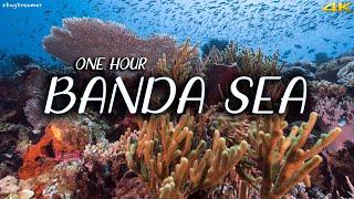 BANDA SEA | 1 HOUR Deep Relaxation Dive, Underwater Cinematic, Meditation, Sleeping (Trilogy Part 2)