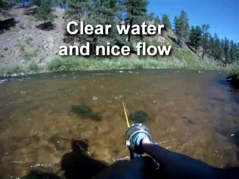 South platte river brown trout deckers colorado fish for Deckers co fishing report