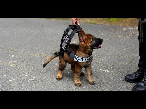 20 minutes of k9 takedowns