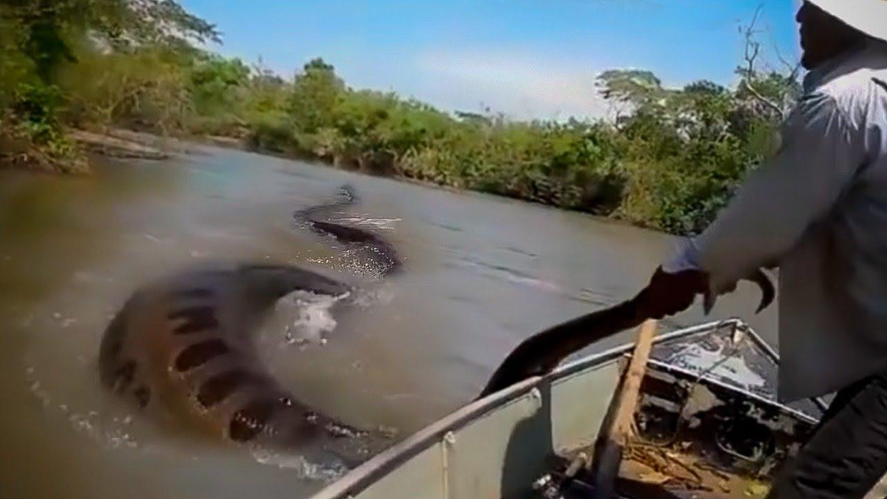 POR QUE O RIO AMAZONAS CRIA MONSTROS?