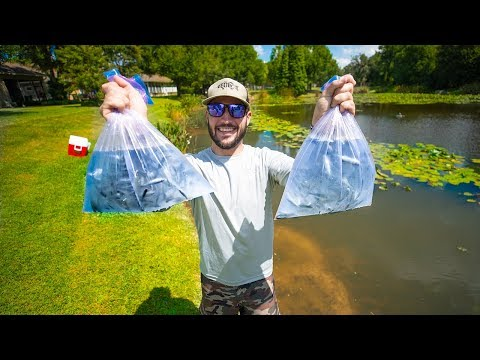 Stocking My Pond With BIG BASS and 400 Shiners!! (big bass feeding)