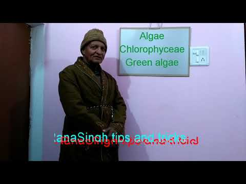 Biology- Class XI- Algae/ Chlorophyceae/ Green algae#