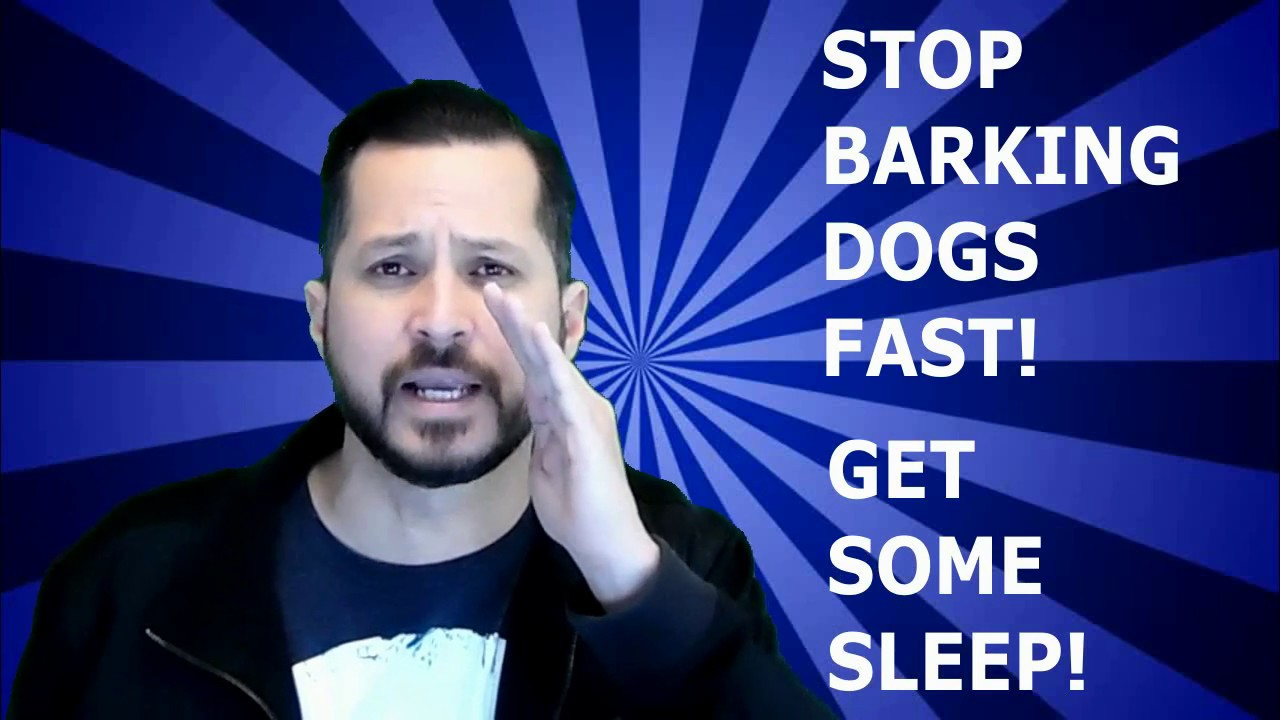 How To Make Your Outside Dog Stop Barking