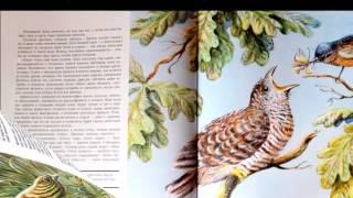 """Отзыв на книгу """"Птицы. Орнитология в картинках"""", автор Николай Сладков"""
