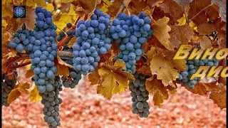 Как сделать виноградная чача 69