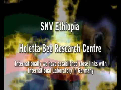 Beza Mar Agro Industry,Ethiopia; Honey Giant SME in East Afr