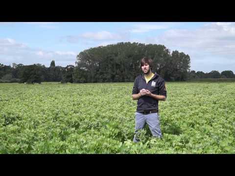 Organic British Quinoa - 19th June 2015