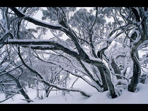 Antarctic Cold Front Plunges Temps to 1970s Levels in Australia's Grain Belt (602)