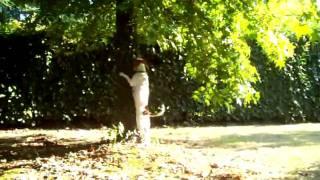 Baixar teo e l'albero