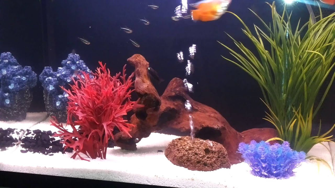 Tropisch zoetwater aquarium   YouTube