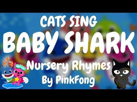 Cats Sing Baby Shark (Nursery Rhyme) by Pinkfong | Cats Singing Song