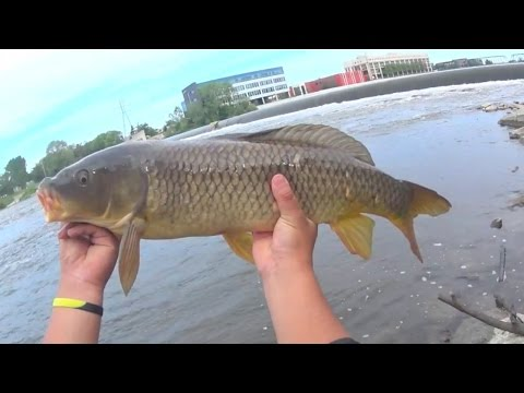 Carp fishing with bread music search engine for Fishing with bread