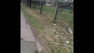 Собаки с Николаева