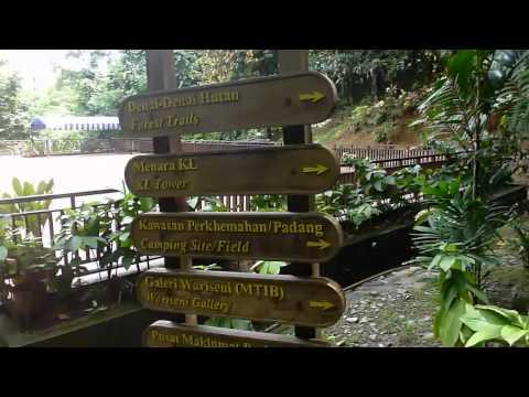 Bukit Nanas Forest Reserve, Kuala Lumpur, HD Experience