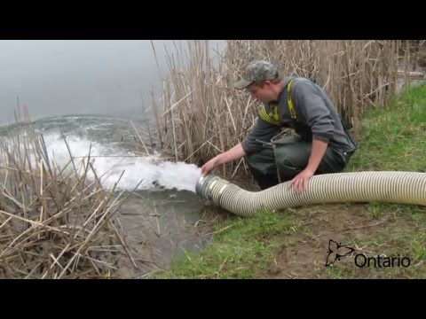 Fish Stocking -- Ontario Fish Culture Program