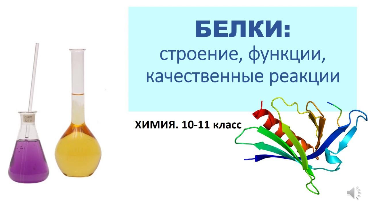 Белки: строение, функции, качественные реакции. Химия 10-11 класс