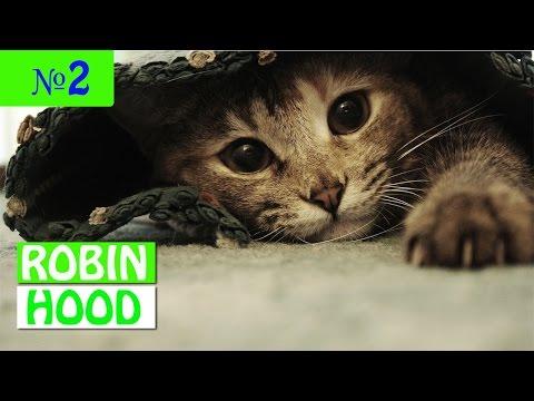 ПРИКОЛЫ 2017 с животными. Смешные Коты, Собаки, Попугаи // Funny Dogs Cats Compilation. Январь №2