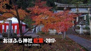 おほふら神社 紅葉 -2017- by DJI OSMO+ thumbnail