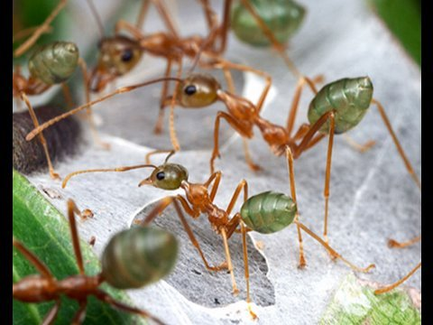 The Secret Life of Ants - Brian Fisher