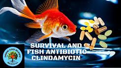 Antibiotic Clindamycin